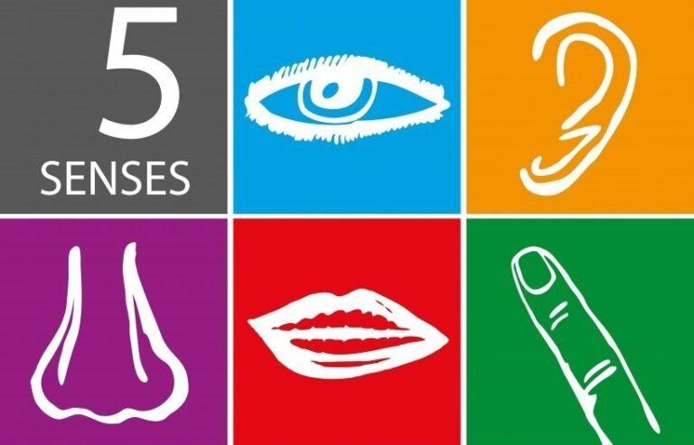 Multi-sensory Learning: Helping Kids Excel Using All 5 Senses